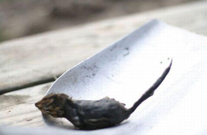 Лягушка и бурундук (17 фото)