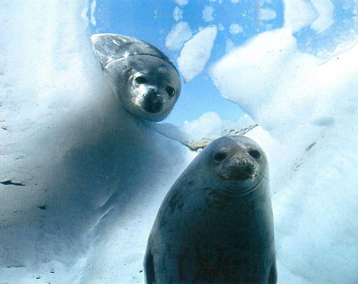 Необычные обитатели моря (23 фото)