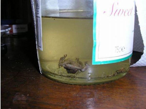 Лягушка в бутылке вина (5 фото)