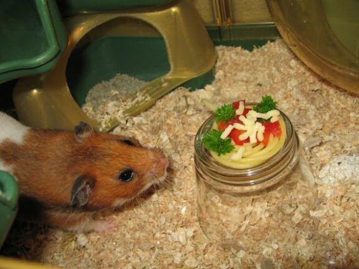 Обед для маленького друга (5 фото)