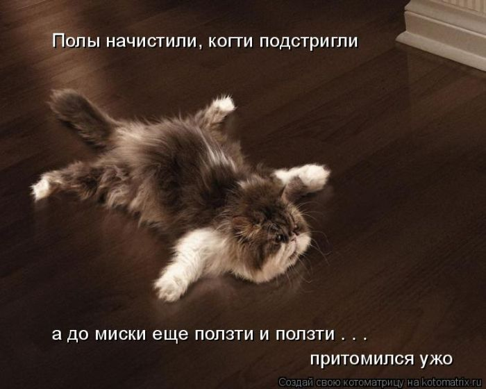 Фото смешных животных (43 фото) .