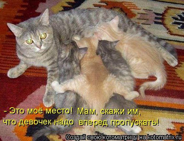 http://de.trinixy.ru/pics4/20101015/kotomatrix_33.jpg