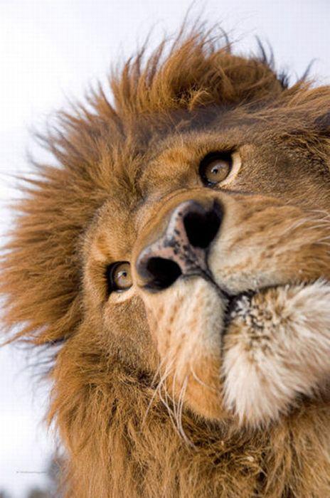 Потрясающие фотографии дикой природы (39 фото)