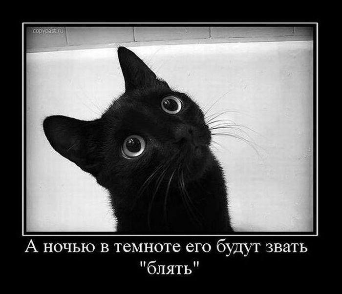 Я просто черный-черный кот, Которого на сей земле так ненавидят, И люди...