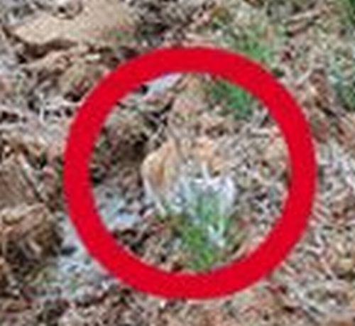 Загадка дня. Найди кота (3 фото)