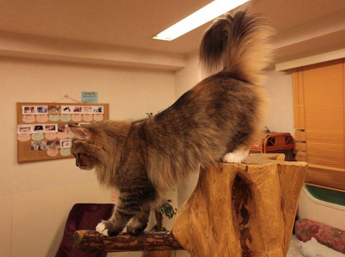 Кошачьи кафе в Токио (44 фото)