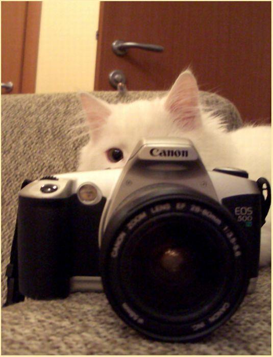 Животные с фотоаппаратами (30 фото)