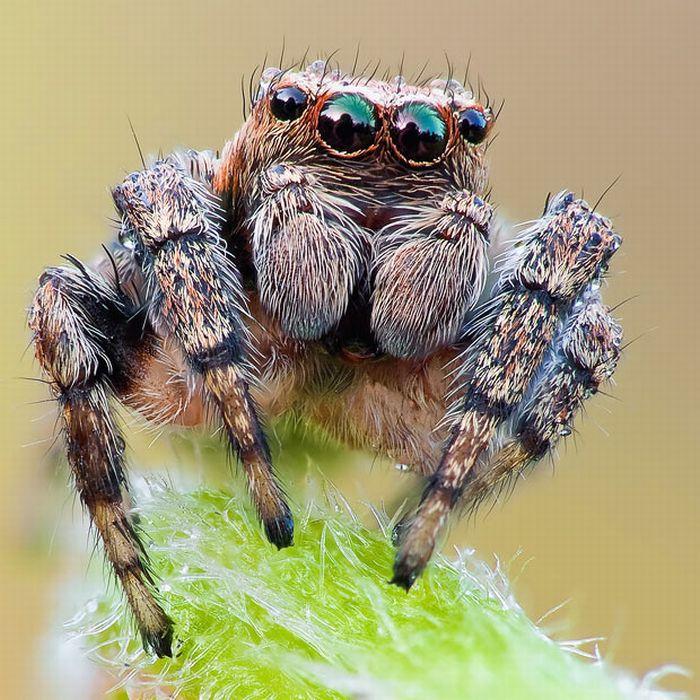 Макро-фотографии насекомых (16 фото)