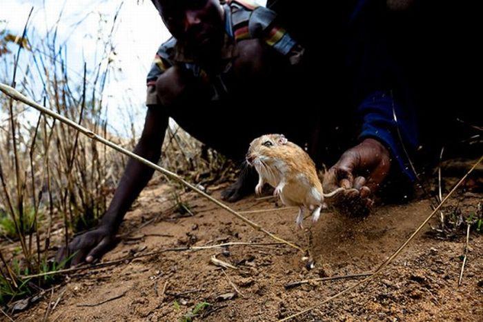 Ловцы крыс (22 фото) - Дальше БОльше