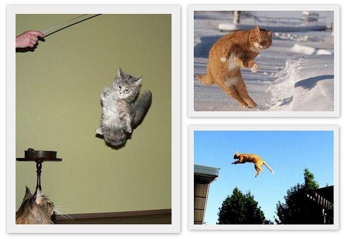 Летающие коты (11 фото)