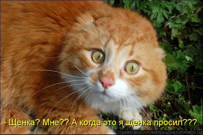 Всех с первым днем весны и Днем кота!