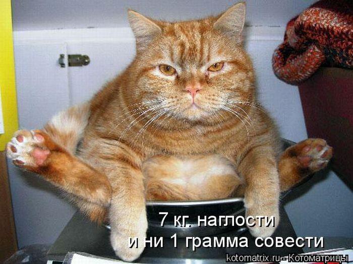 http://de.trinixy.ru/pics4/20101022/kotomatrix_31.jpg