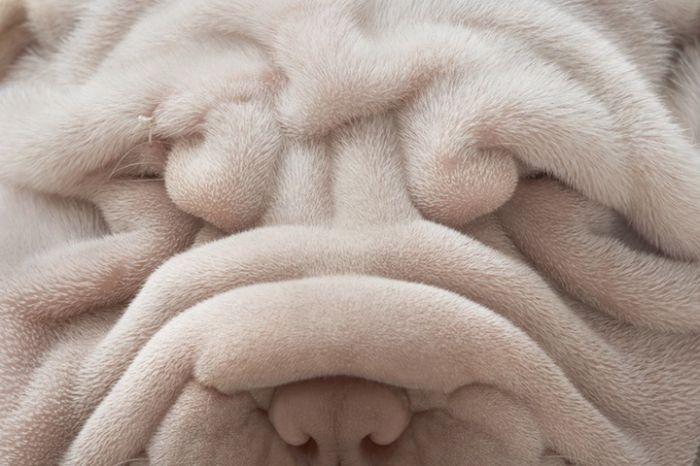 Классные портреты собак (15 фото)