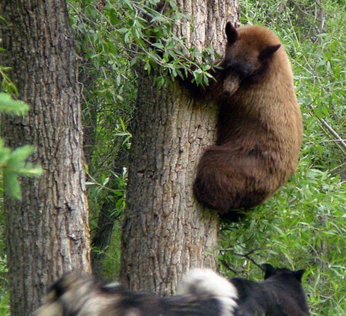 И тут пришел медведь (6 фото)