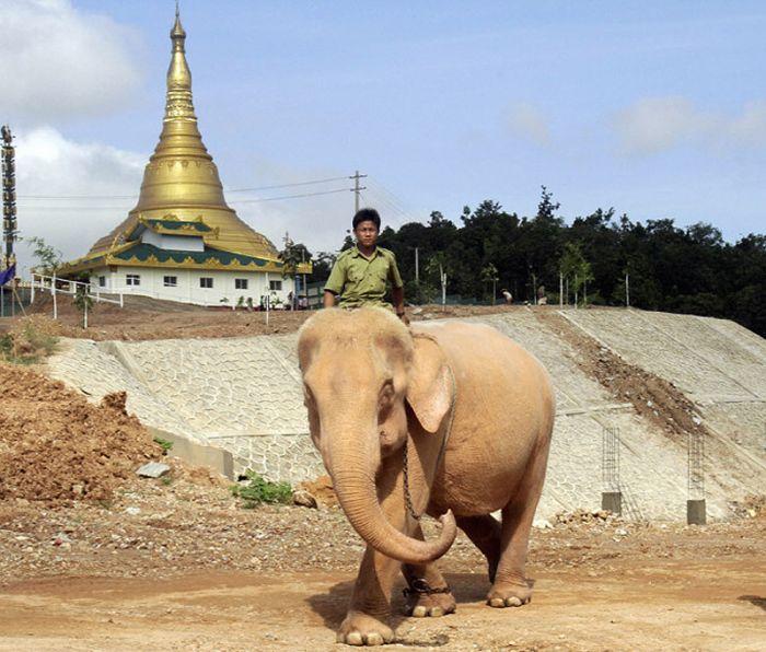 Белые слоны (7 фото)
