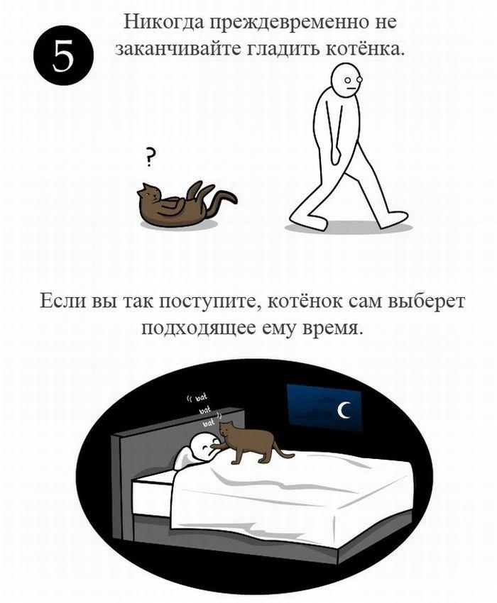 Как ласкать кота (6 картинок)