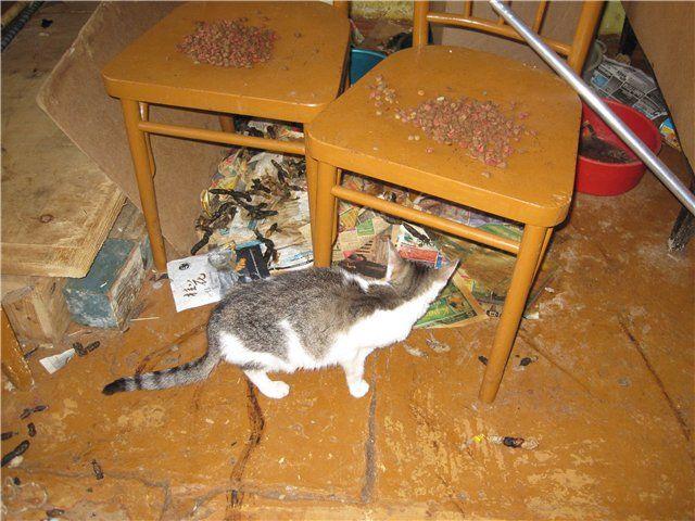 Коты в опечатанной квартире (21 фото)