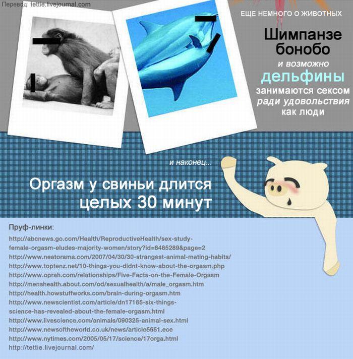 Вся правда об оргазмах (5 картинок)