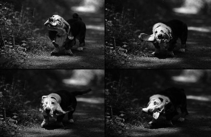 Прикольные картинки (121 фото)