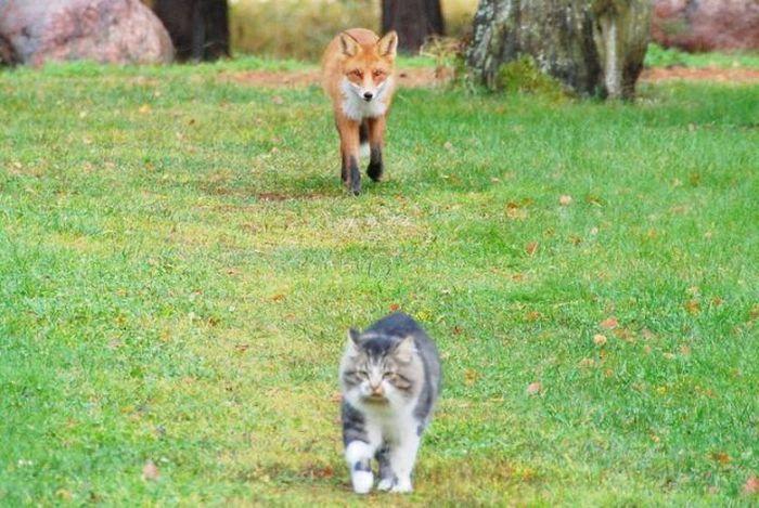 Лиса и Кот (2 фото)