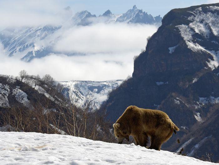 Медвежьи какашки (5 фото)