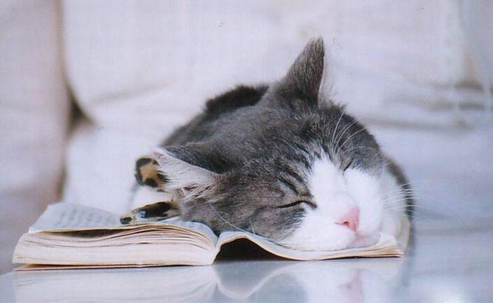 Смешные спящие животные (21 фото)