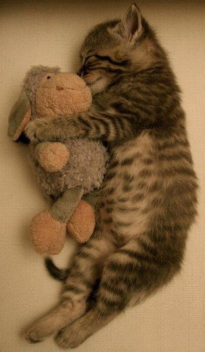funny_sleeping_animals_17.jpg