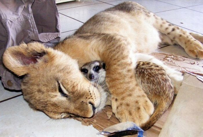 Funny sleeping animals (21 photos)
