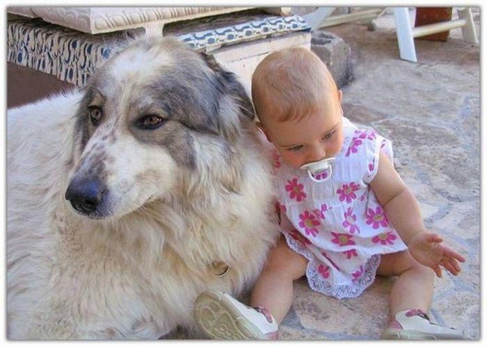 Детишки и  домашние животные (20 фото)