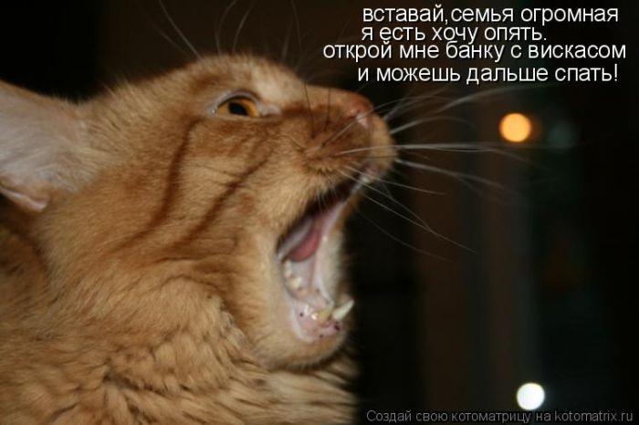http://de.trinixy.ru/pics4/20101103/kotomatrix_36.jpg