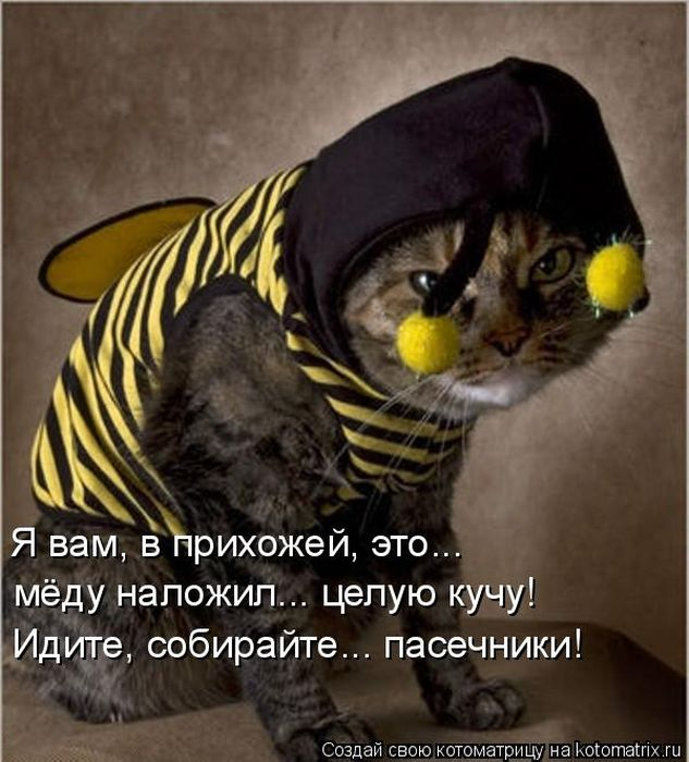 http://de.trinixy.ru/pics4/20101103/kotomatrix_41.jpg