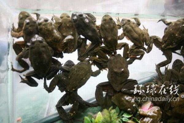 Коктейль из лягушек (6 фото)