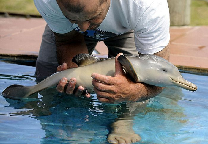 10-дневный дельфин (7 фото)