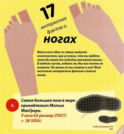 17 интересных фактов о ногах (2 картинок)