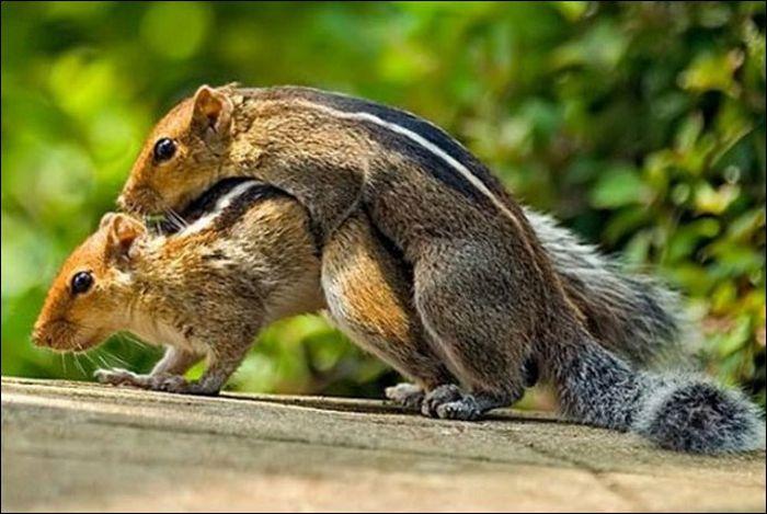 Животные занимаются любовью (19 фото)