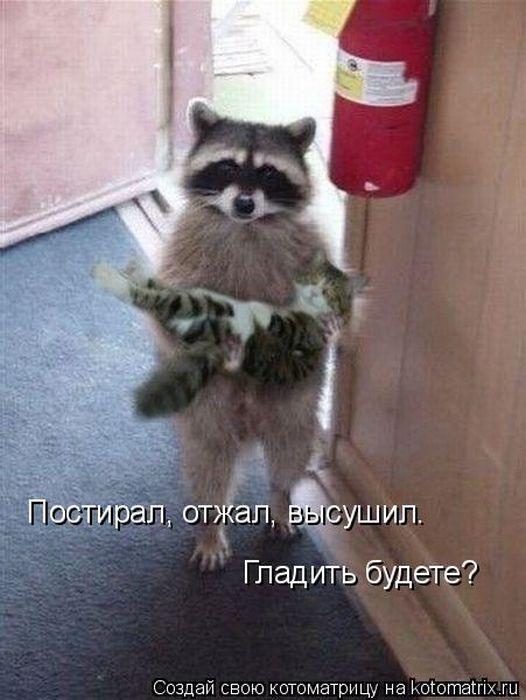 http://de.trinixy.ru/pics4/20101112/kotomatrix_32.jpg