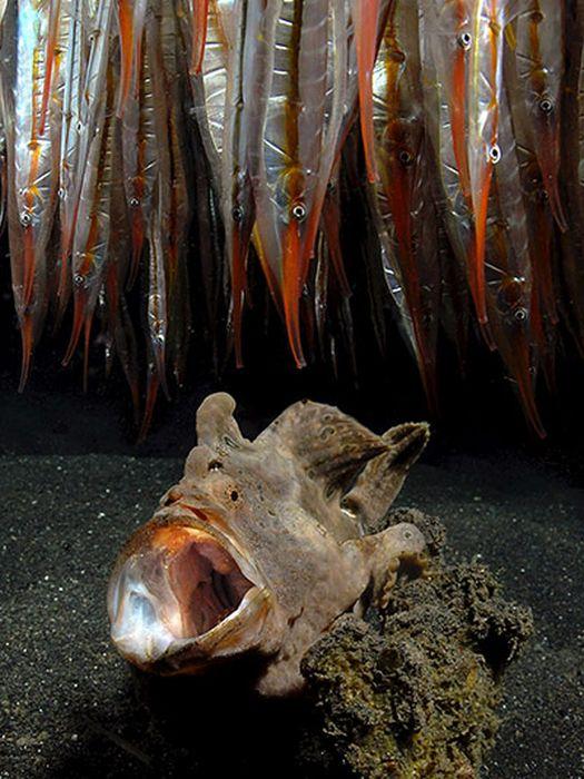 Лучшие подводные фотографии 2010 (24 фото)