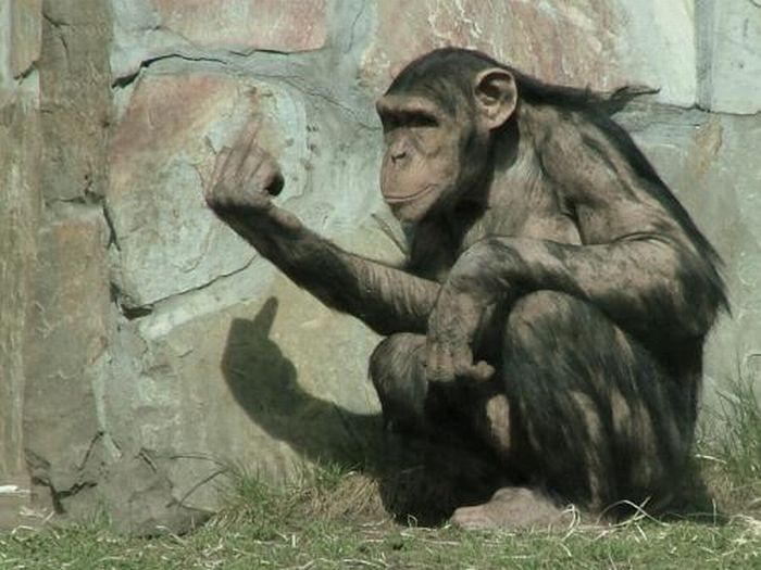 Животные показывают средний палец (24 фото)