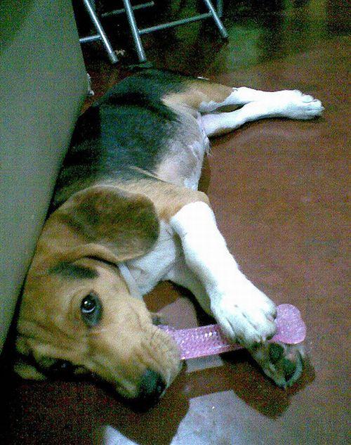 Собаки и фаллоимитаторы (14 фото)