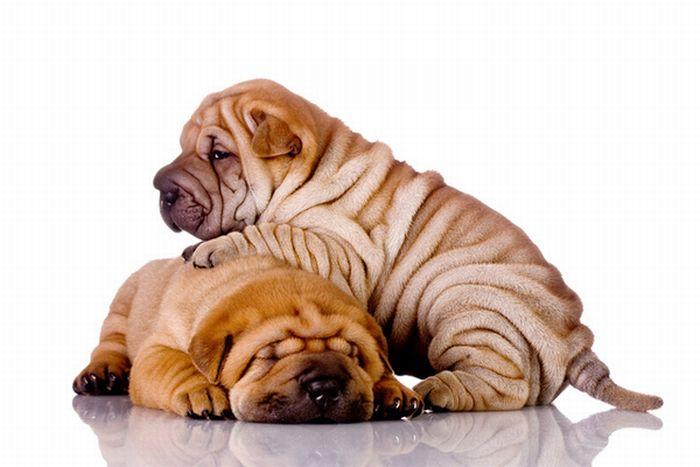 Собаки,которые выглядят обкуренными (16 фото)