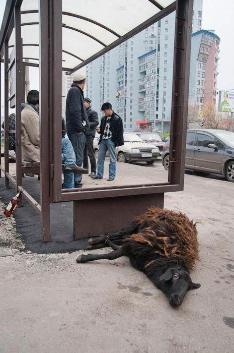 Курбан-Байрам в Москве (36 фото)