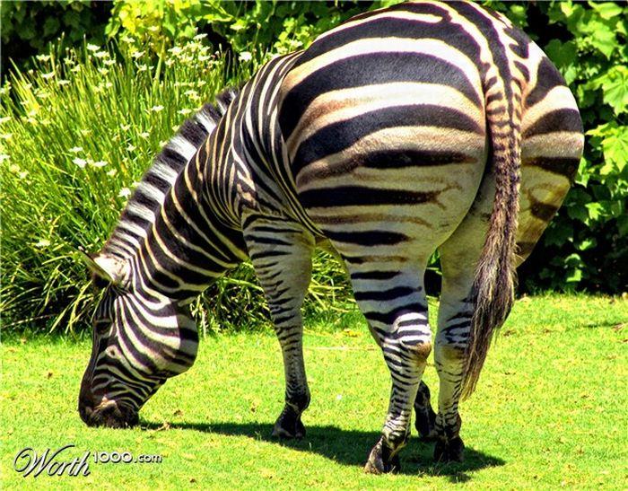 Толстые животные (20 фото)