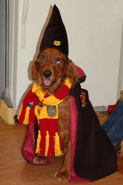 Животные Гарри Поттера (20 фото)