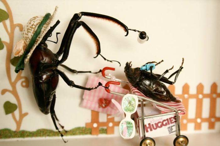 Подарки, жуки прикольные картинки