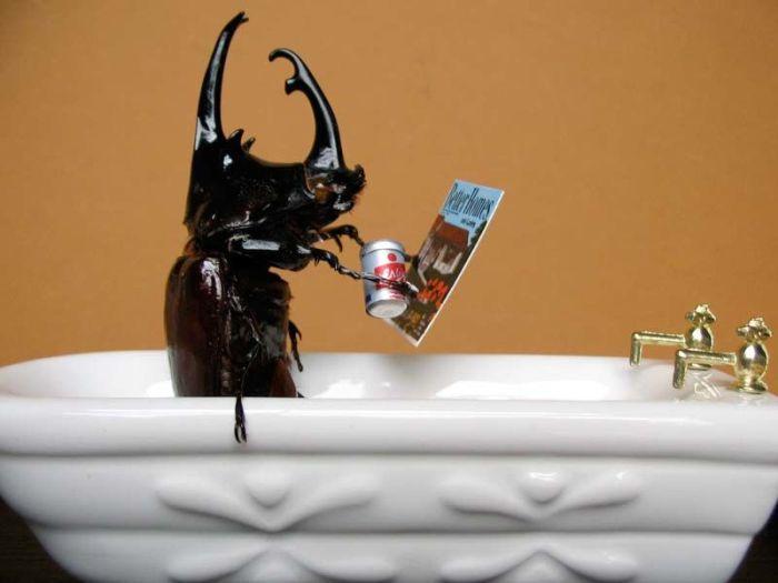 Жуки, живущие жизнью людей (32 фото)