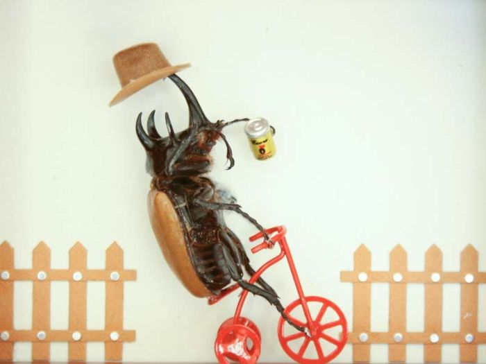 Дорожного движения, жуки прикольные картинки