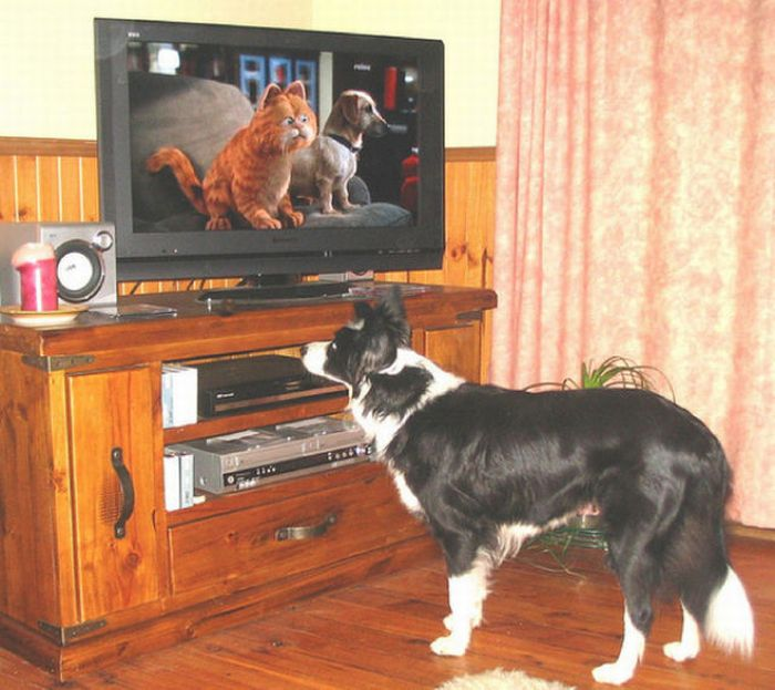 Животные смотрят телевизор (78 фото)