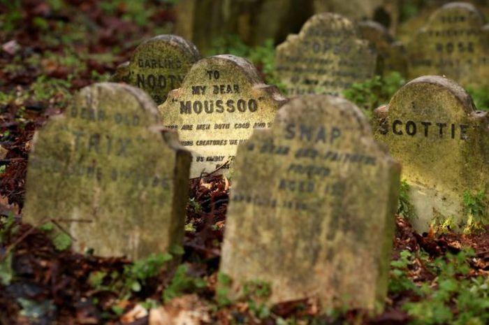 Кладбище домашних животных в центре Лондона (8 фото)