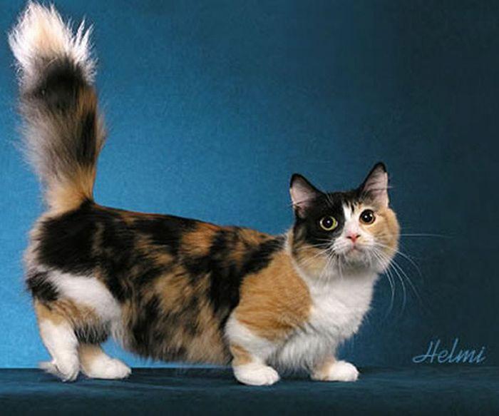 Симпатичные эмо-девушки (78 фото).  Летающие коты (54 фото)