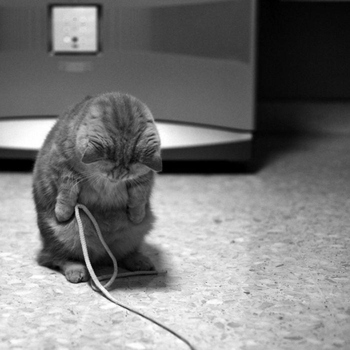 Симпатичные коты (34 фото)